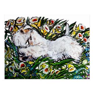 Carte Postale Jonquilles de Sealyham Terrier