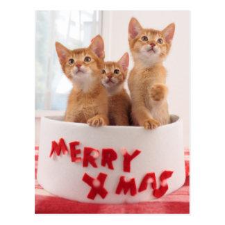 Carte Postale Joyeux minous de Noël