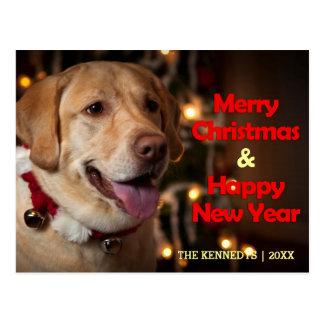 Carte Postale Joyeux Noël - collier de labrador retriever Bell