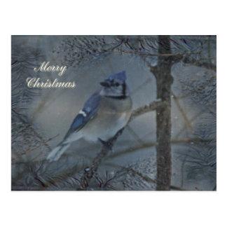 Carte Postale Joyeux Noël - geai bleu oriental