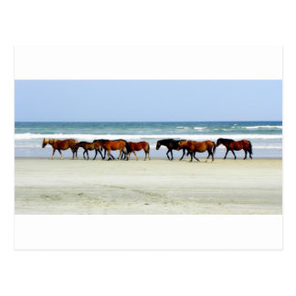Carte Postale Jpg des chevaux sauvages OBX OR