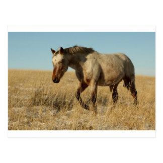 Carte Postale Jument d'Appaloosa sur les prairies