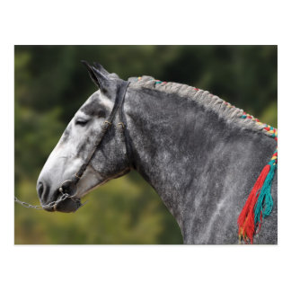 Carte Postale Jument de cheval de trait de Percheron