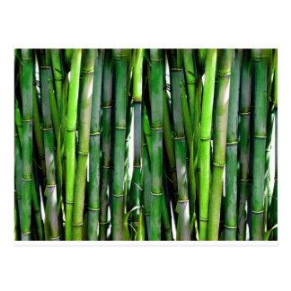 Carte Postale Jungle en bambou de nature de plante verte