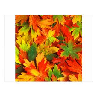 Carte Postale Kaléidoscope d'automne de