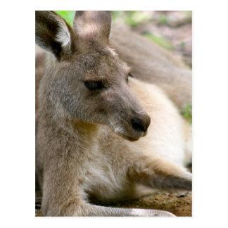 Carte Postale Kangourou