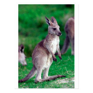 Carte Postale Kangourou mignon de bébé de joey