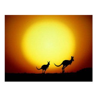 Carte Postale Kangourous dans l'Australien à l'intérieur
