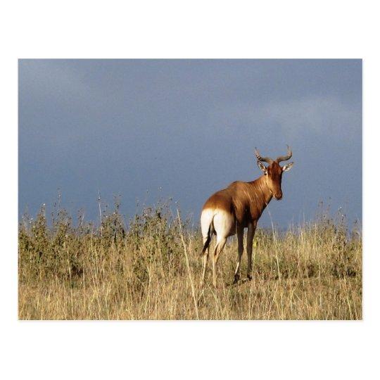 Carte Postale Kenya - Nairobi National Park