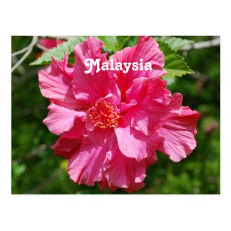 Carte Postale Ketmie de la Malaisie