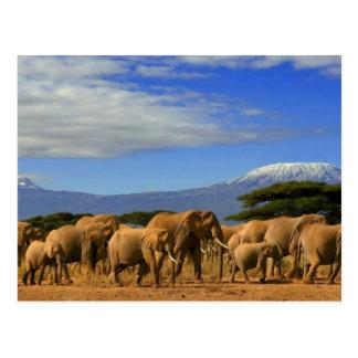 Carte Postale Kilimanjaro et éléphants