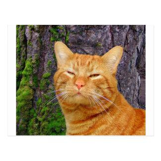 Carte Postale Kitty heureux KAT !