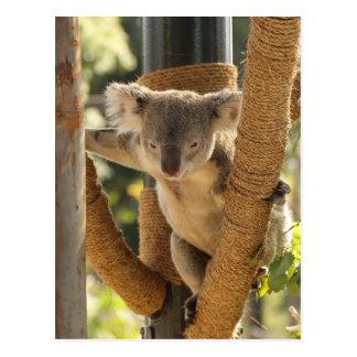 Carte Postale Koala