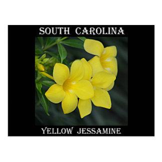 Carte Postale La Caroline du Sud Jessamine jaune