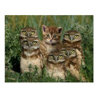 Carte Postale la chouette et les kitten