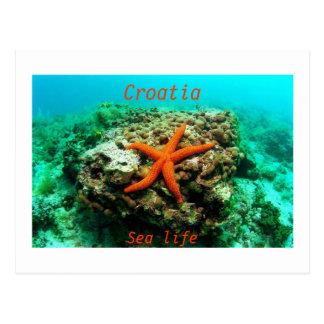Carte Postale La Croatie - vie marine