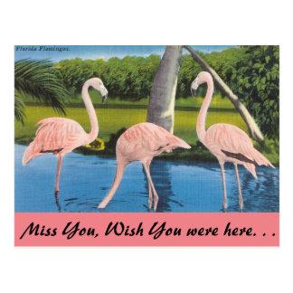 Carte Postale La Floride, flamants