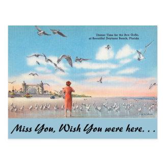 Carte Postale La Floride, mouettes, Daytona Beach