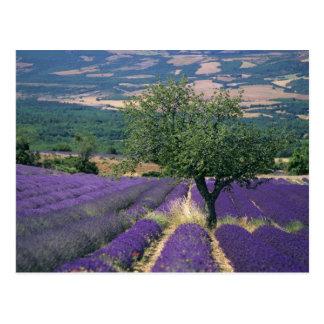 Carte Postale La France, PACA, Alpes-De-Haute-Provence, 3