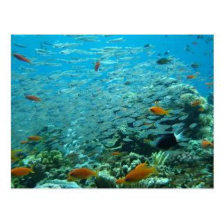Carte Postale La grande barrière de corail en Australie