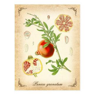 Carte Postale La grenade - illustration vintage