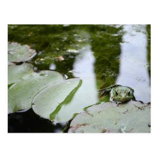 """Carte Postale La grenouille indique """"salut """""""
