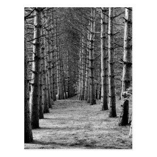 Carte Postale La ligne de trees.jpg