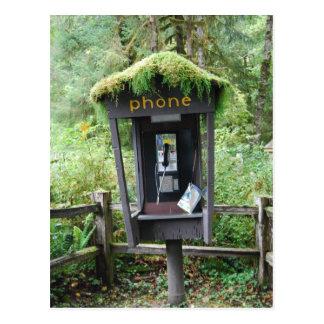 Carte Postale La mousse a couvert la cabine de téléphone