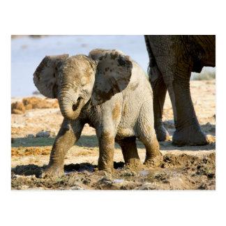 Carte Postale La Namibie, Afrique : Éléphant africain de bébé