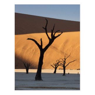 Carte Postale La Namibie, désert de Namib, Sossusvlei,