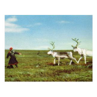 Carte Postale La Norvège vintage, Laponie, Sami avec le renne