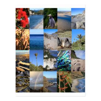Carte Postale La Nouvelle Zélande Kiwiana pittoresque côtier