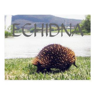 Carte Postale La personnaliser de nature animale d'ECHIDNA