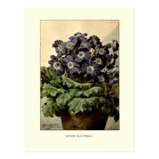 Carte Postale La primevère bleue de Suttons