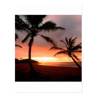 Carte Postale La République Dominicaine de paumes tropicales