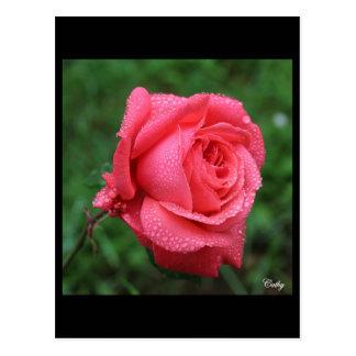 Carte Postale La Rose