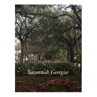 Carte Postale La savane du centre la Géorgie