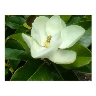 Carte Postale La savane la Géorgie de fleur de magnolia