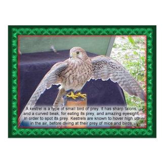 Carte Postale La Science, animaux, oiseau, crécerelle