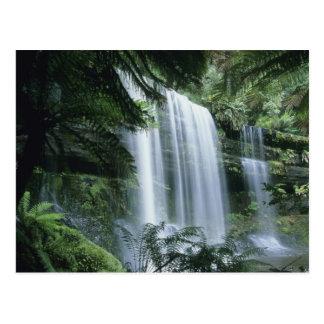 Carte Postale La Tasmanie, parc national de champ de Mt.,