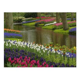 Carte Postale La tulipe et la jacinthe font du jardinage, les
