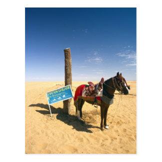 Carte Postale La Tunisie, région de Ksour, Ksar Ghilane, cheval
