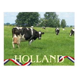 Carte Postale La vache vous regardant la Hollande effraye la