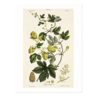 """Carte Postale La vigne d'houblon, """"du jeune terrien"""", édité"""