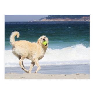 Carte Postale Labradoodle - jour heureux sur la plage