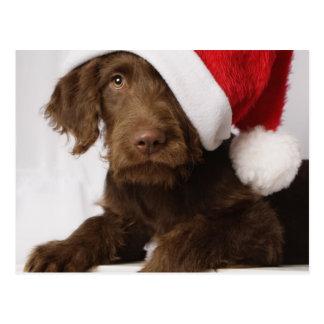 Carte Postale Labradoodle utilisant un casquette de Père Noël