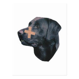 Carte Postale Labrador retriever à la Bande-Aide