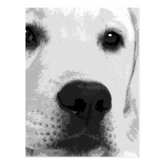 Carte Postale Labrador retriever noir et blanc