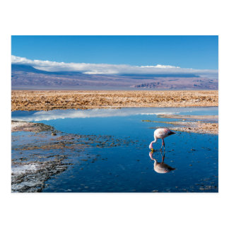 Carte postale, Lac en San Pedro d'Atacama, le