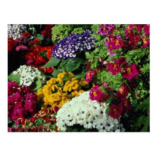 Carte Postale L'affichage floral dans Niagara gare la serre